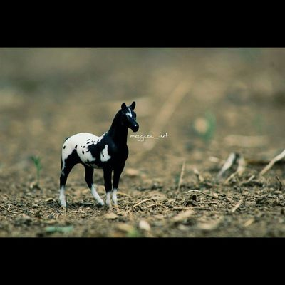 """""""You cannot use someone else's fire, You can only use your own, and in order to do that you must be willing to believe that you have it."""" . . Breyer Breyers Breyerhorse Breyerhorsephotography Modelhorse Modelhorses Modelhorsephotography Breyerhorses"""
