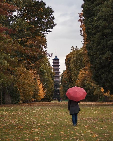 Autumn Umbrella Real People Rear View Tree One Person Outdoors Nature Fall Colors Fall Beauty Fall Autumn Trees Autumn Leaves Autumn Autumn Colors Hidden Gems  Beauty In Nature Tree Nature