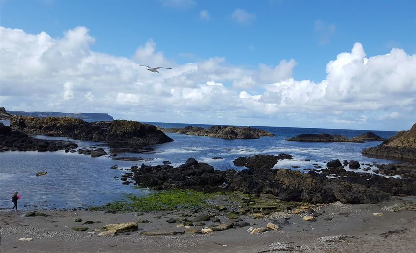 One Person Unrecognizable Person Cloudy Sky Beauty In Nature Tranquil Scene Outdoors Tranquil Scene Outdoors Scenics Ballintoy Ballintoy Harbour Flying Bird Sea Airshow Beach Water Blue Mid-air Sand My Best Photo