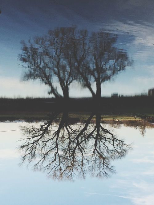 Reflection Reflections In The Water Tree Muldental Upside Down River EyeEm Best Shots Photooftheday Abstract
