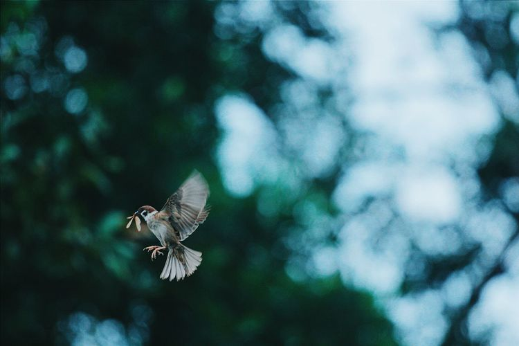 bird. Animal Wildlife One Animal Animals In The Wild Spread Wings Bird Flying Nature Bird Of Prey Animal Themes Beauty In Nature Close-up EyeEm Diversity EyeEmNewHere Break The Mold Art Is Everywhere TCPM