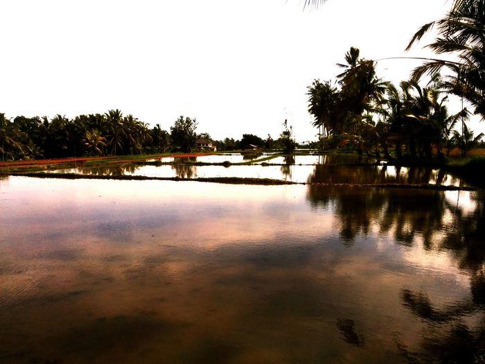 Ricefieldsarethelimit Bali