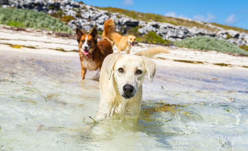 Portrait of dogs in sea