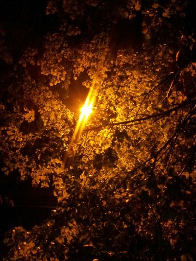 Nature Night Lights
