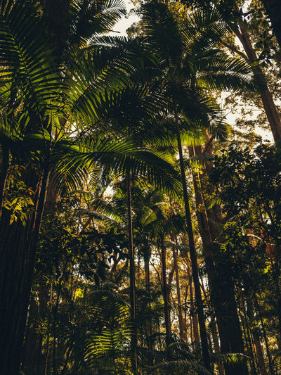 Beauty In Nature Day Forest Green Color Growth Land Leaf Low Angle View Nature No People Outdoors Palm Leaf Palm Tree Plant Sunlight Tall - High Tranquility Tree Tree Canopy  Tree Trunk Tropical Climate Tropical Tree Trunk