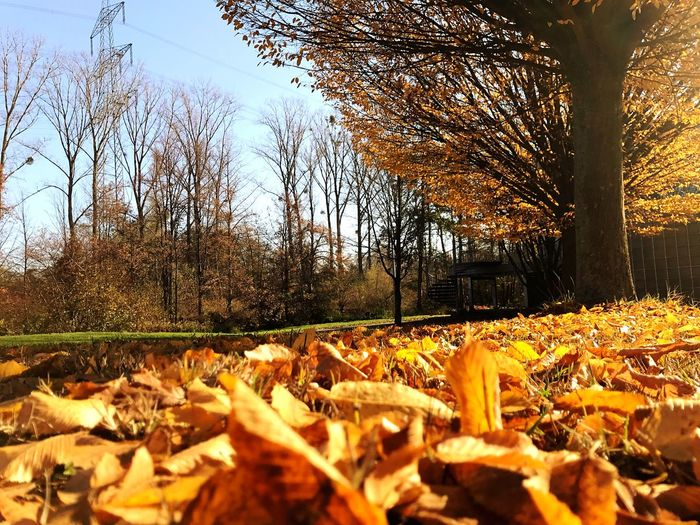 Beautiful Autumn Trees Nature Plant Tree No People Leaf Day Plant Part Sunlight Outdoors Sky Autumn Land Beauty In Nature Tranquility Close-up Falling Dry Growth