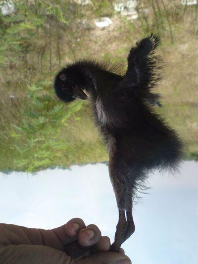 unlucky bird. save this bird One Animal Pet Portraits