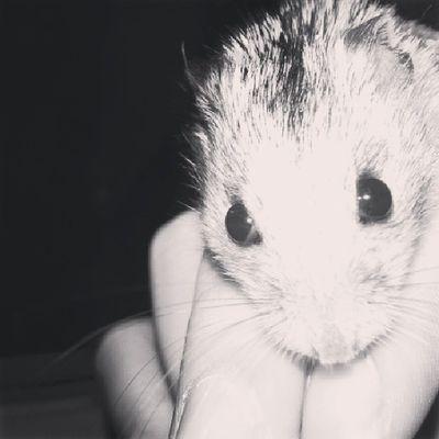 Fredballs is cuter than you..