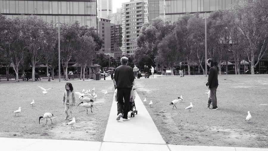 Birds everywhere !!! Natureinthecity Birds Park Sydney Bnw_friday_eyeemchallenge