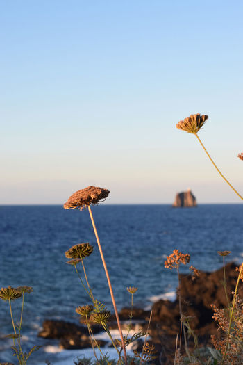 seascape with a volcanic island. the sea through the dry flowers Iland Lava Medeteranian Sea Nature Outdoors Plant Sea Stones Stromboli Stromboli Island Stromboli Volcano Volcano