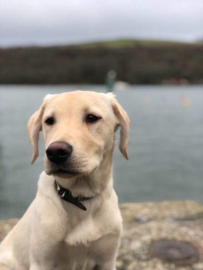 Close-up of dog at riverbank against sky