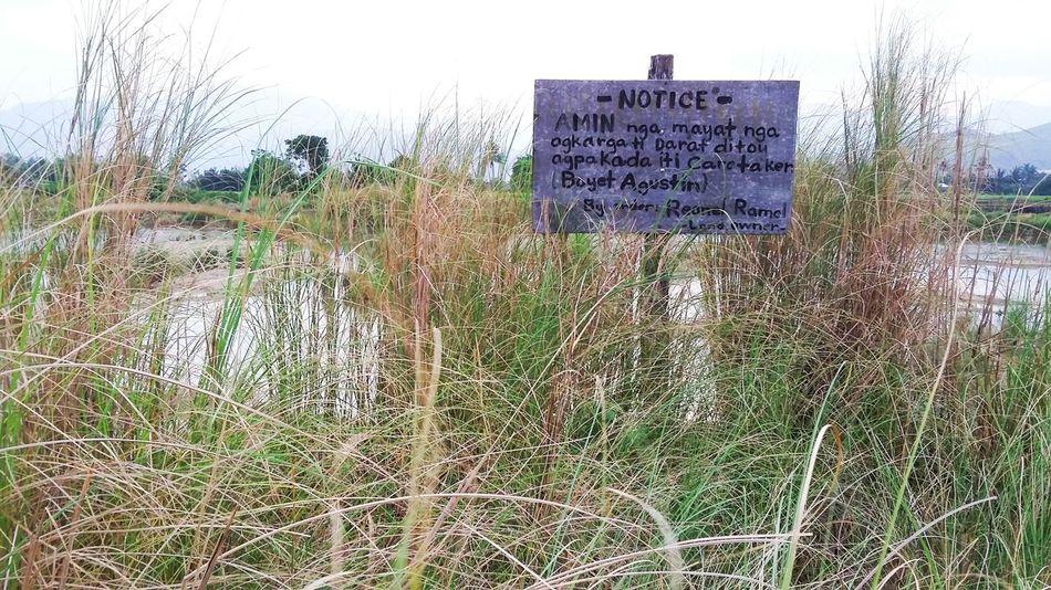 Samsungphotography Samsunggalaxygrandprime Samsung Tall Grass Notice Board Notice Sky Ilocano
