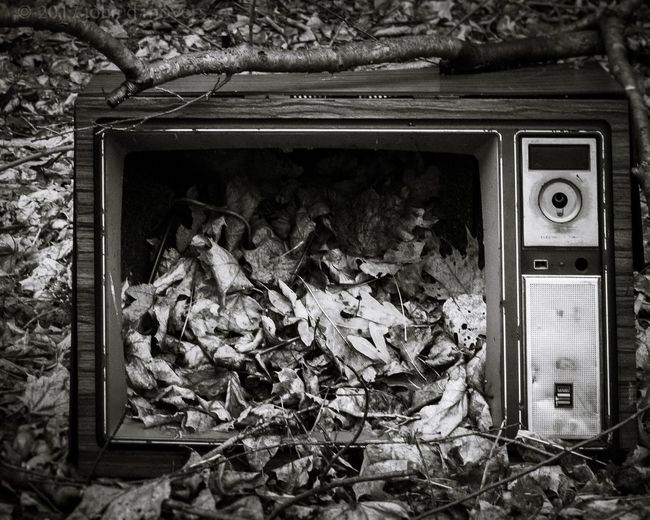 best thing on tv... lanaconing, maryland Outdoors Close-up Canon Canon6d Television Derelict Leaves Culture Lanaconing, Maryland Media Commentary Forgotten Found old television