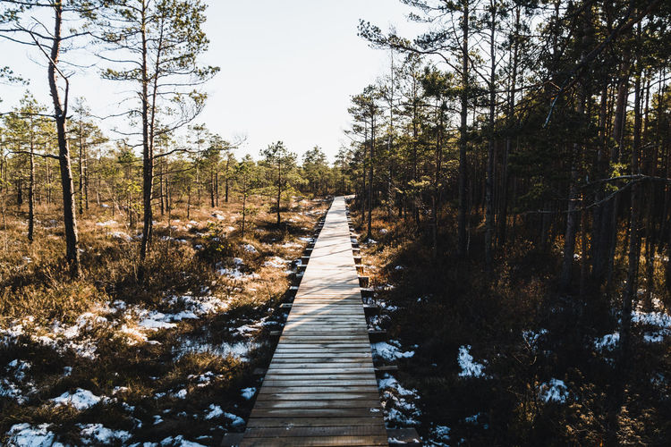 Boardwalk amidst trees in forest against sky