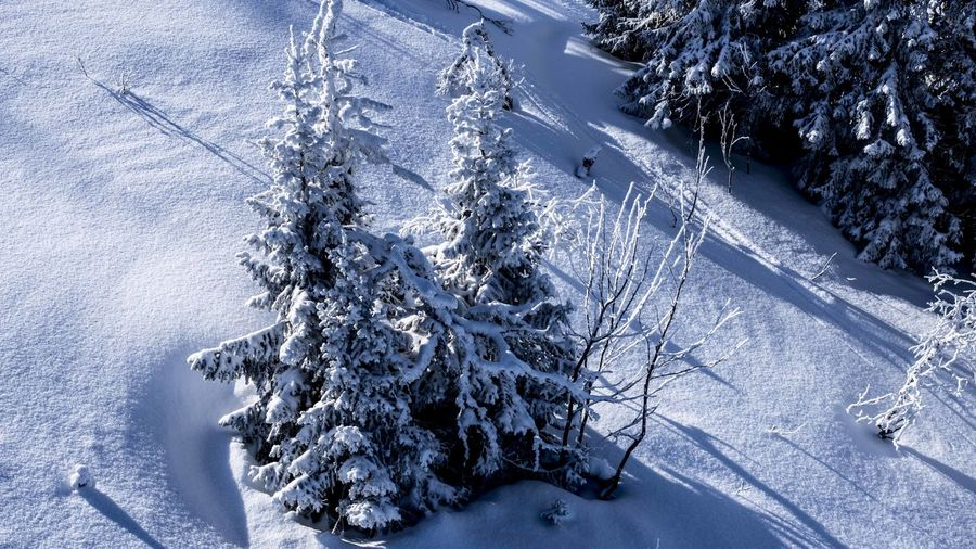 Marcweberde Snow Winter Cold Temperature Tree Plant Nature Beauty In Nature Scenics - Nature White Color Day Land Environment No People Landscape Tranquil Scene Forest Mountain Pine Tree Tranquility Outdoors Coniferous Tree Snowcapped Mountain Snowing Pine Woodland