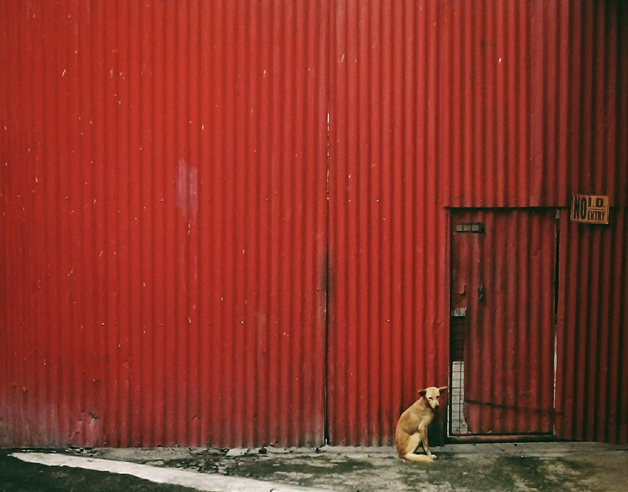 Dog Sitting Against Red Metallic Door
