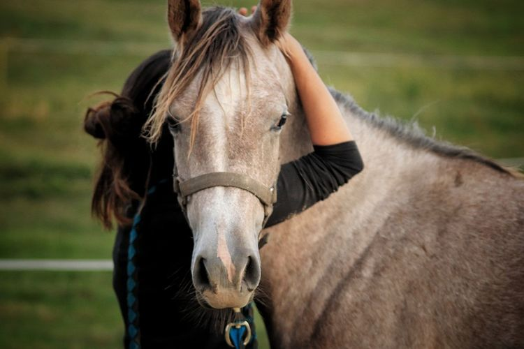 Caballo @airendurance Domestic Animals One Animal People Looking At Camera Animal Body Part Pets Outdoors Animals In The Wild Nature