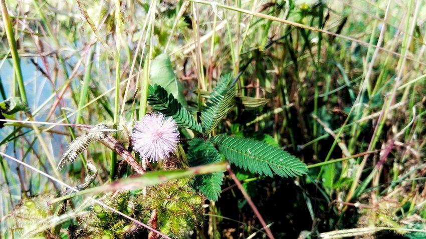 Close-up Plant Green Color