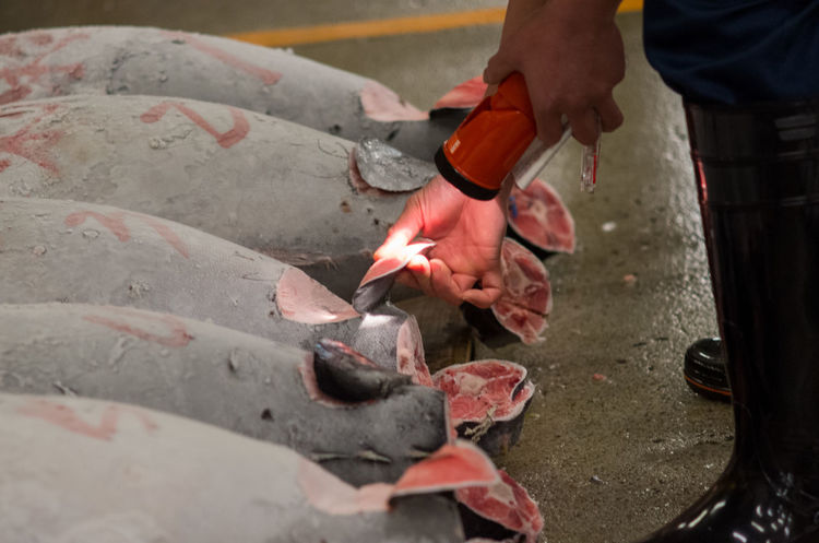 Auction Business Buying Choosing Fish Fish Market Frozen Inspecting Market Quality Skill  Tsukiji Tsukiji Fish Market Tuna Tunafish