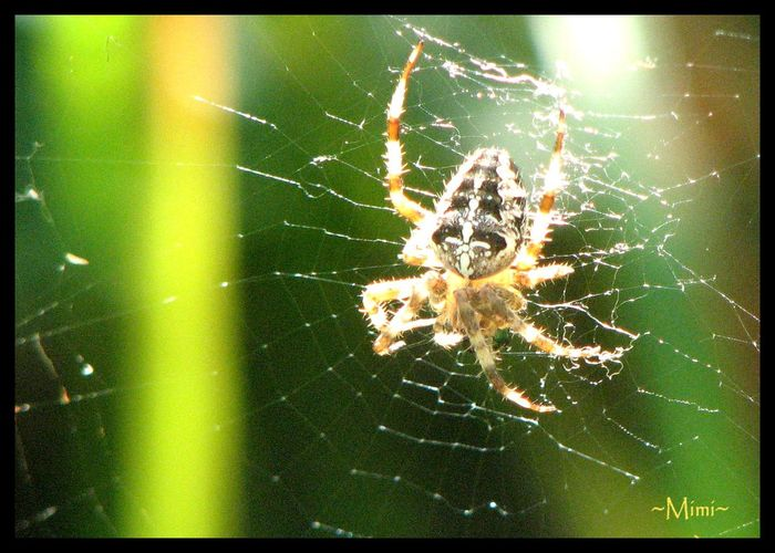 Fragility Nature No People Oka National Park Outdoors Scary Spider Spider Web