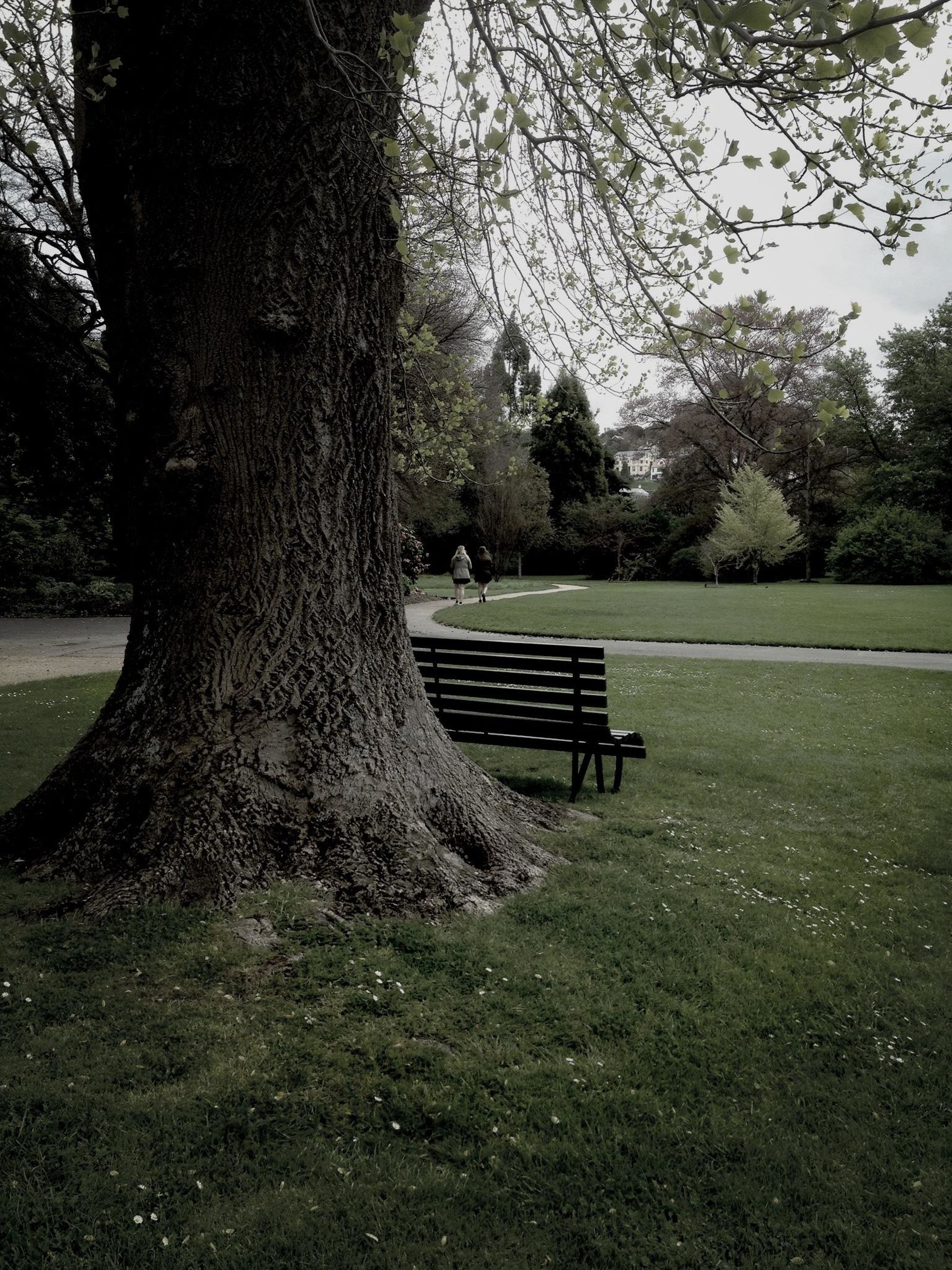 tree, tree trunk, grass, tranquility, bench, park - man made space, empty, absence, tranquil scene, park, nature, park bench, growth, shadow, landscape, scenics, branch, field, beauty in nature, day