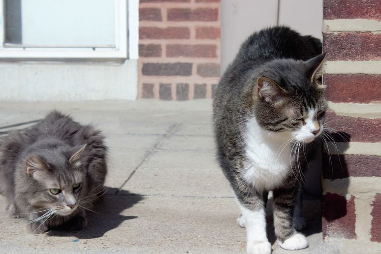 Cats sitting on front stoop