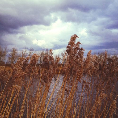 Riverside Reed Clouds And Sky Weather Photography In Motion