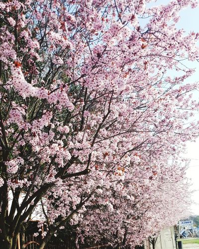 Spring it's