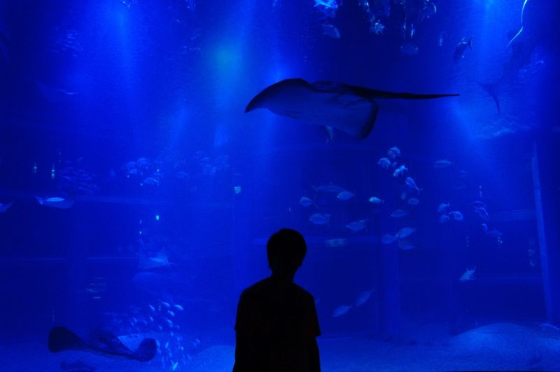 Aquarium Fish Sea Life Silhouette Underwater Aquatic Shark Watching First Time Tranquility Water Group Of Animals