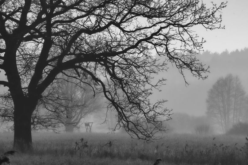 Bare trees on field during foggy weather