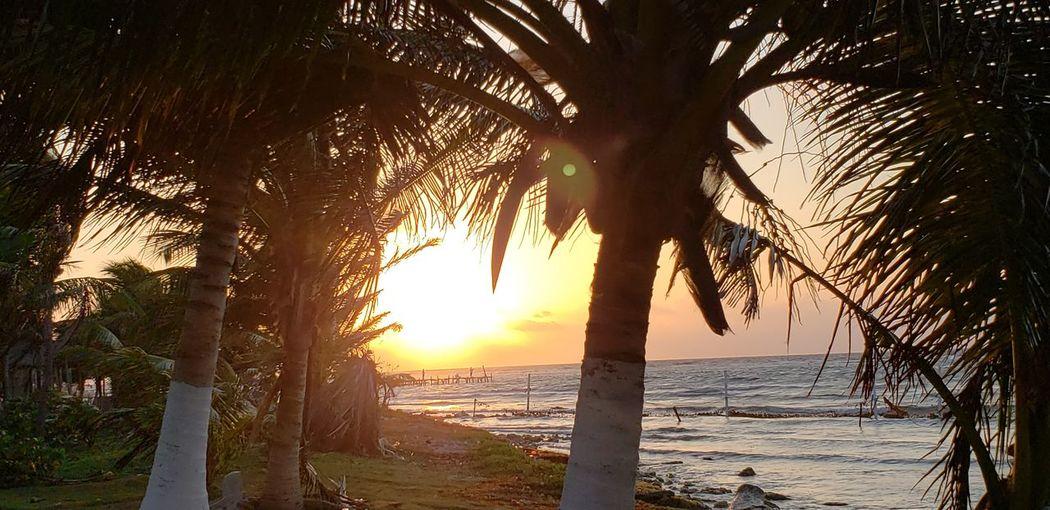 The Traveler - 2019 EyeEm Awards Tree Water Sea Sunset Beach Palm Tree Sand Beauty Sunlight Sun