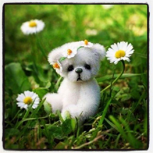 Cute Little Teddy Ongrass Green CutestPicOnNetToday Adorable