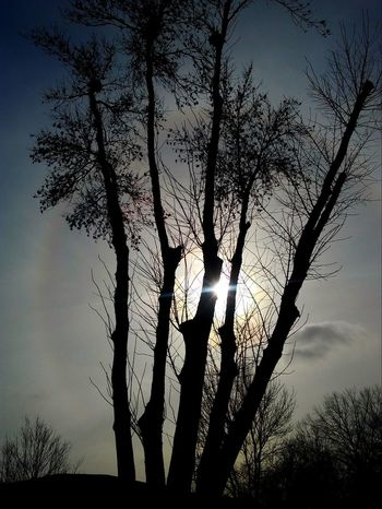 Halo Check This Out Sunbeams Tree Silhouette Sky Nature Tree Trunk Low Angle View Outdoors Beauty In Nature Day Branch