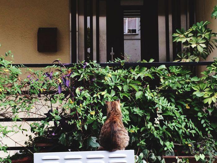Cats Cat Lovers Imwaiting4u Love Patience