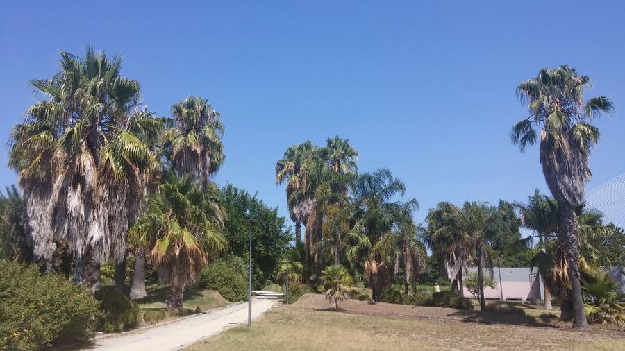 Scenic view of palm trees against clear sky