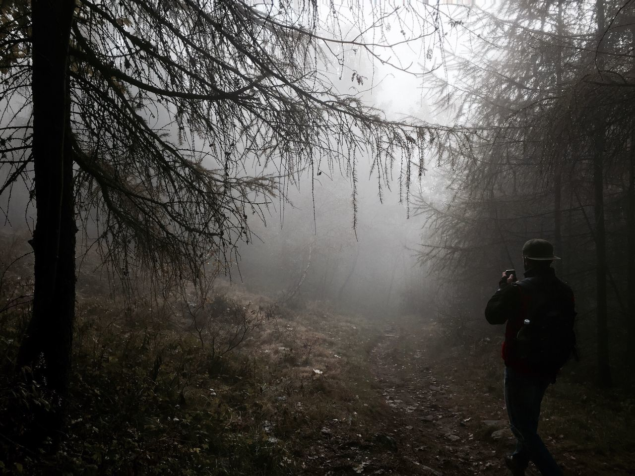 forest, tree, rear view, adventure, one person, fog, nature, hiking, backpack, standing, real people, beauty in nature, men, branch, scenics, lifestyles, outdoors, day, adult, people, adults only