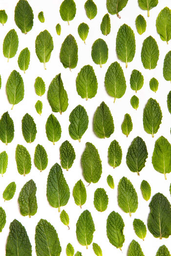 High angle view of plants against white background