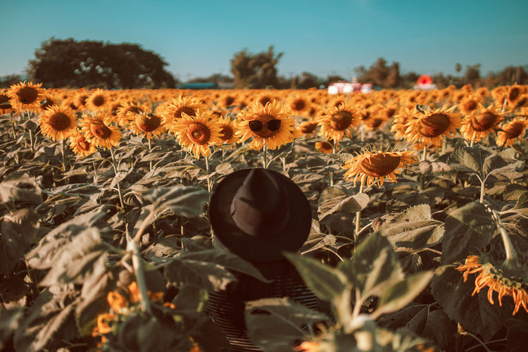 Sunflower with glasses.🌻🌻🌻. Young woman Standing looking Sunflower glasses. Sunset Nature Flower Sunflower Sky Landscape Women Portrait Holiday Sunflowers Field Celebration Field Outdoors Hello World Plant Land Sunflowers Freshness Beauty In Nature No People Holding Sunflowers🌻 Sunflower🌻 Flower Head