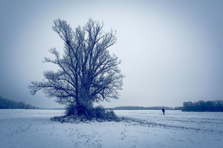 Blue Copy Space Cold Isolated Non-urban Scene Clear Sky Deep Snow Land Landscape Sky Environment Scenics - Nature Tranquility Tranquil Scene Field Plant Beauty In Nature Bare Tree Tree Winter Cold Temperature Snow Outdoors One Person
