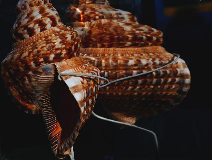 Large shell display close-up