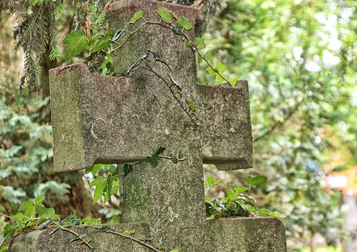 Cemetery Close-up Cross Day Focus On Foreground Growth Nature No People Outdoors Stone Cross Tree Tree Trunk
