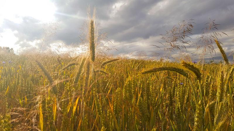 It feels a bit like autumn! 🙄 Hello World Hi! Enjoying Life Whereisthesummer Wannwirdmalwiedersommer Natur Vielegrüsse Licht Und Schatten Summer Sommer Clouds And Sky Cloud Nordhessen