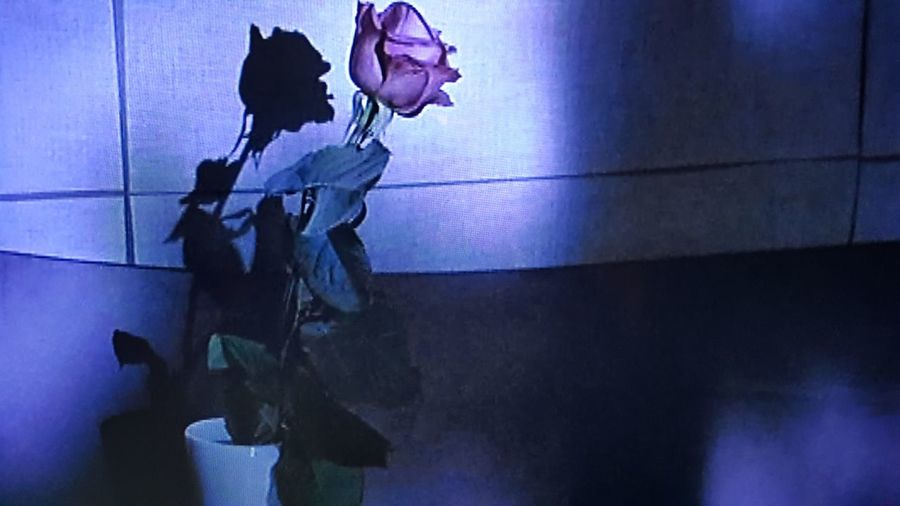 Rose Reflection Wall Light