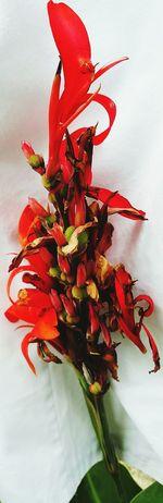 Flowers Red&green prawdziwa natura, nie piękny kwiatek z obrazka :)