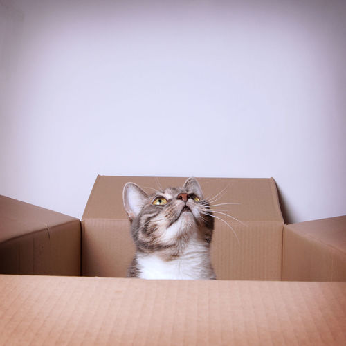 Cat in cardboard box against wall