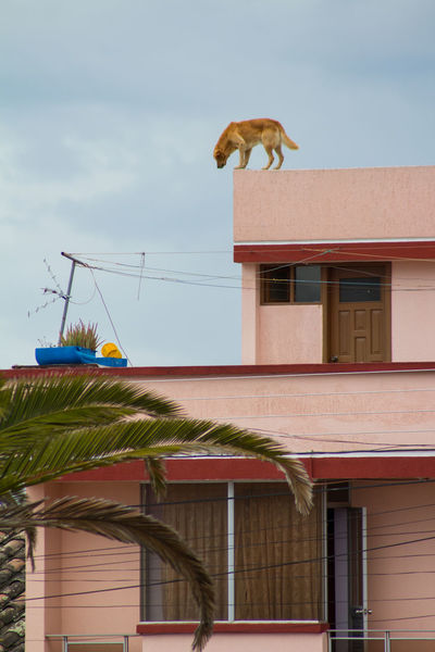#dog #dogs #ecuador #southamerica Architecture Outdoors Roof Sky