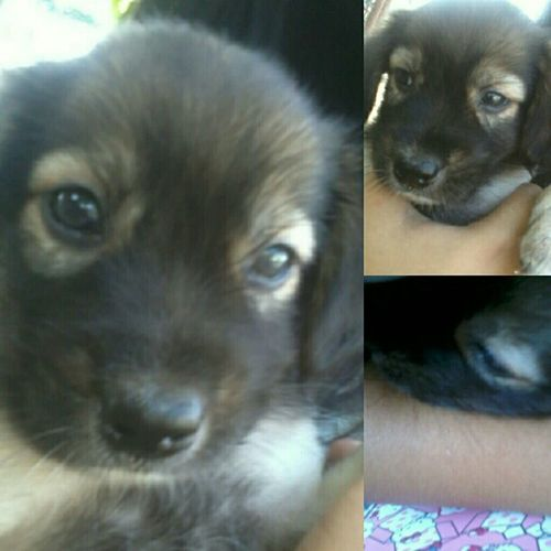 hi baby siopao ♥ be good ha? pero pagdating sa amo mong ewan, dapat makulit ka. hahaha. Prettysiopao Puppy Love