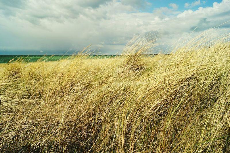 Ahrenshoop Dune
