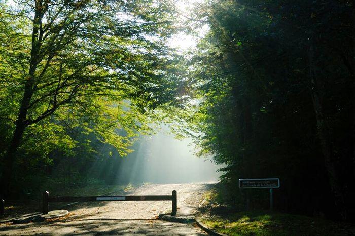 Contre Jour Green Forest Petit Chemin