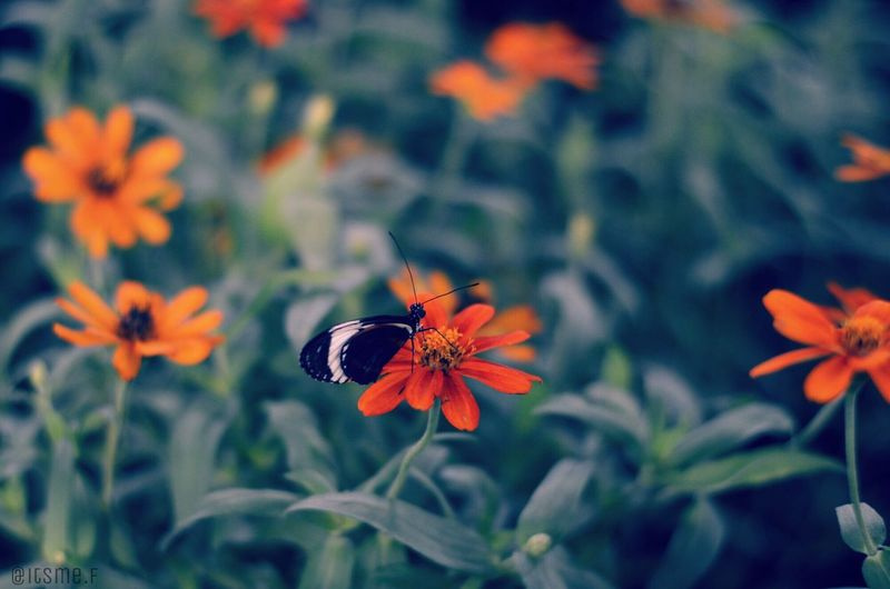 Perspectives On Nature Butterfly Flower Orange Grass Nikon D3200 Nikonphotographer Nikon Animal Insects